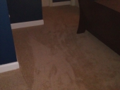 Julington Creek Carpet Flooring Job